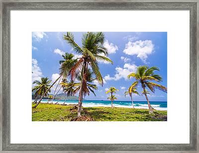 Lush Green Palm Trees Framed Print by Jess Kraft