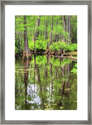 Lush Framed Print by JC Findley
