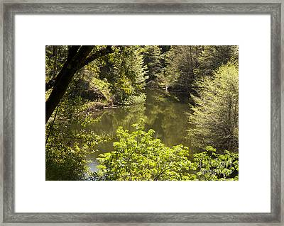 Lush Lake  Framed Print by Juan Romagosa