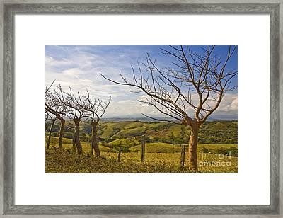Lush Land Leafless Trees 2 Framed Print