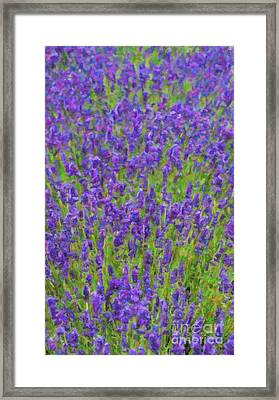 Lush Lavendula Framed Print by Tim Gainey