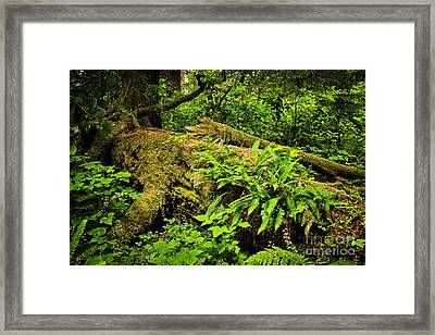 Lush Temperate Rainforest Framed Print