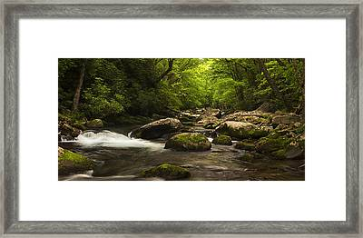 Lush Woods At Spring Framed Print by Andrew Soundarajan