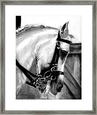 Lusitano Horse Portrait Framed Print by Olde Time  Mercantile