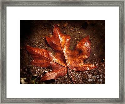 Lustrous Maple Framed Print by Tikvah's Hope