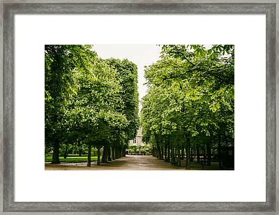 Luxembourg Park Trees Framed Print