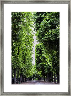 Luxembourg Tree Avenue In Paris Framed Print