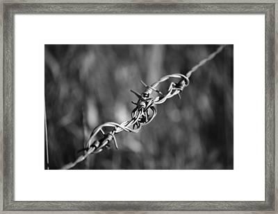 Lwv50001 Framed Print