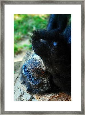 Lwv50014 Framed Print by Lee Wolf Winter