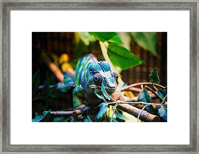 Lwv50016 Framed Print