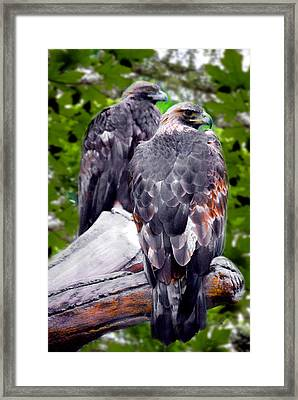 Lwv50018 Framed Print