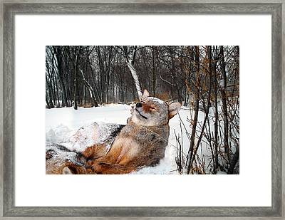 Lwv50040 Framed Print by Lee Wolf Winter