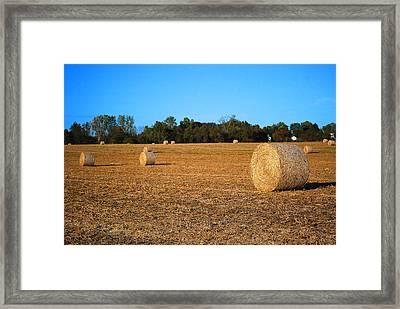 Lwv50042 Framed Print