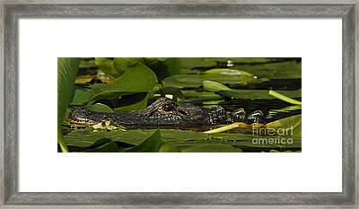 Framed Print featuring the photograph Lying In Wait by Vivian Christopher