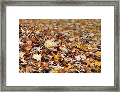 Lying On The Ground Framed Print by Ester  Rogers