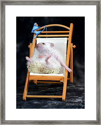 Lyla Sunbathing Framed Print by Paul  Wilford