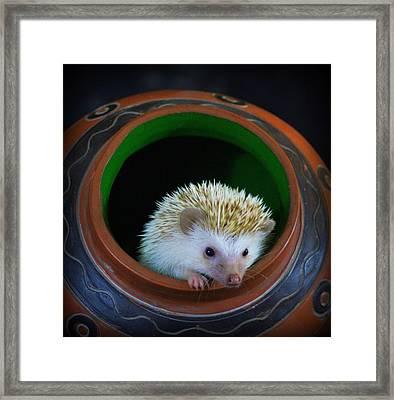 Lyla The Hedgehog Framed Print