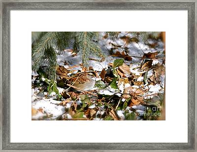 Lynne' Framed Print by Jay Nodianos