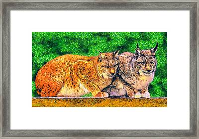Lynx Framed Print by George Rossidis