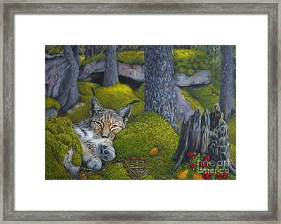Lynx In The Sun Framed Print by Veikko Suikkanen