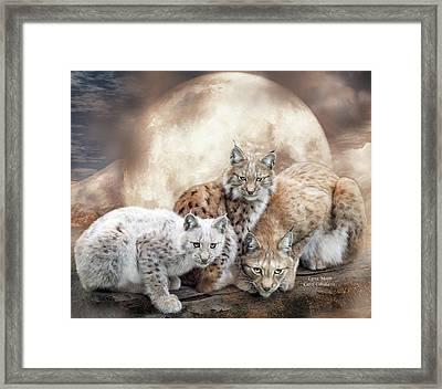 Lynx Moon Framed Print by Carol Cavalaris