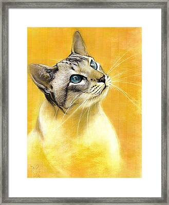 Lynx Point Siamese Framed Print by VLee Watson