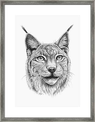 Lynx Portrait Framed Print by Iren Faerevaag