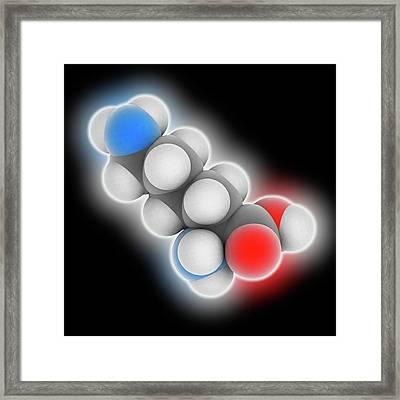 Lysine Molecule Framed Print