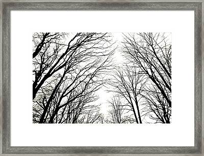 M C Tree Tops Framed Print by Jeffrey J Nagy