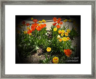 M Color Combination Flowers Collection No. Cc10 Framed Print