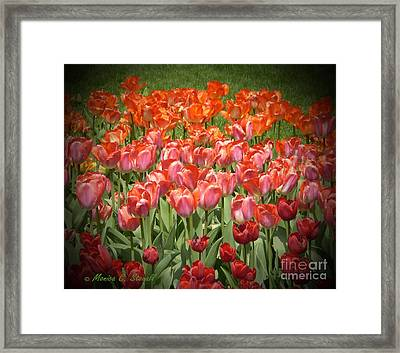 M Color Combination Flowers Collection No. Cc12 Framed Print
