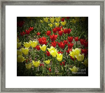 M Color Combination Flowers Collection No. Cc2 Framed Print