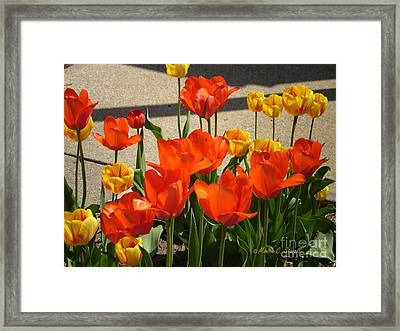 M Color Combination Flowers Collection No. Cc3 Framed Print