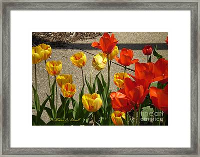 M Color Combination Flowers Collection No. Cc4 Framed Print