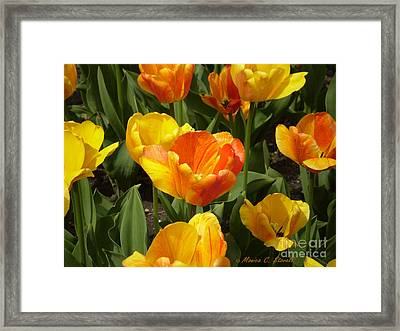 M Color Combination Flowers Collection No. Cc7 Framed Print