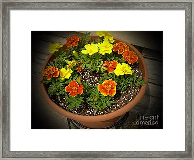 M Color Combination Flowers Collection No. Cc8 Framed Print