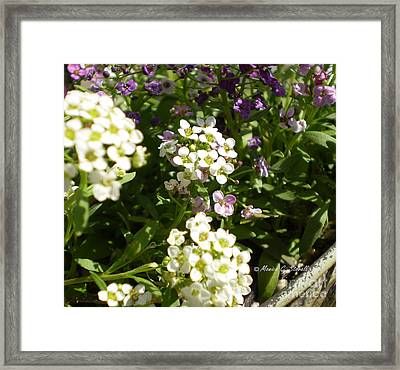 M Color Combination Flowers No. Cc21 Framed Print by Monica C Stovall