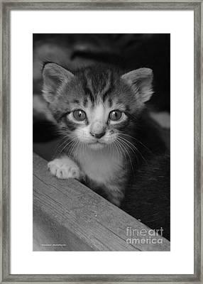 M Kitten Framed Print by Tannis  Baldwin
