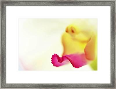 M Petal Framed Print by Suradej Chuephanich