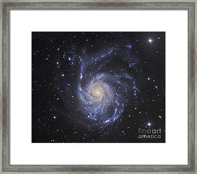 M101, The Pinwheel Galaxy In Ursa Major Framed Print by Robert Gendler