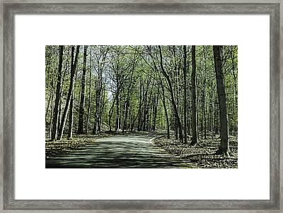 M119 Tunnel Of Trees Michigan Framed Print