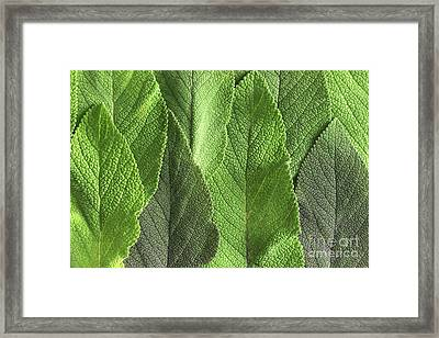 M7500790 - Sage Leaves Framed Print by Spl
