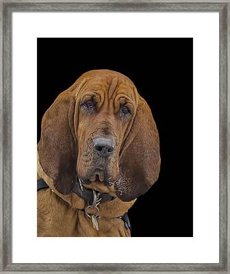Mabel Framed Print by Penny Pesaturo