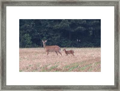 Mable The Female Deer With Harriet The Baby Fawn Framed Print by Debbie Nester
