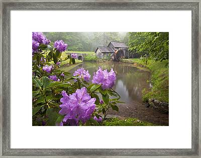 Mabry Rhododendron Framed Print