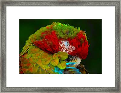 Mac-awwww Framed Print