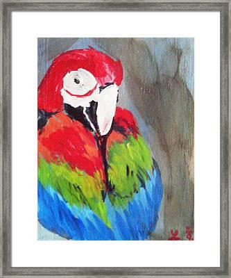 Macaw 2 Framed Print