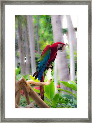 Framed Print featuring the photograph Macaw by Angela DeFrias