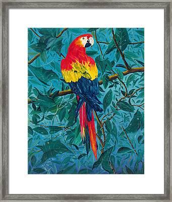 Macaw Framed Print by Carl Genovese