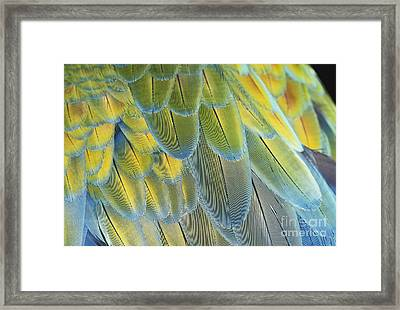 Macaw Feathers Framed Print by George D Lepp